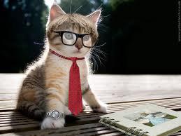 kucing-berdasi